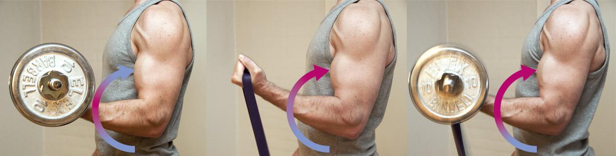 Bicepcurl med håndvægt og elastik